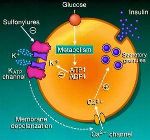 Mechanism of action of